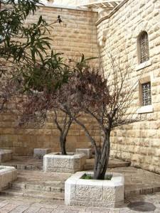 Élő Izrael Jerusalem